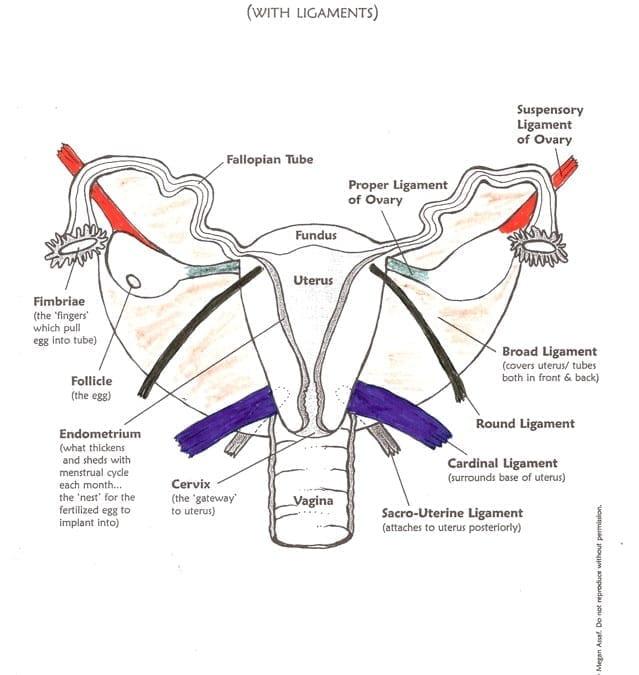 Help for Prolapsed Uterus