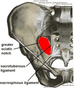 sacralspinous-ligament1